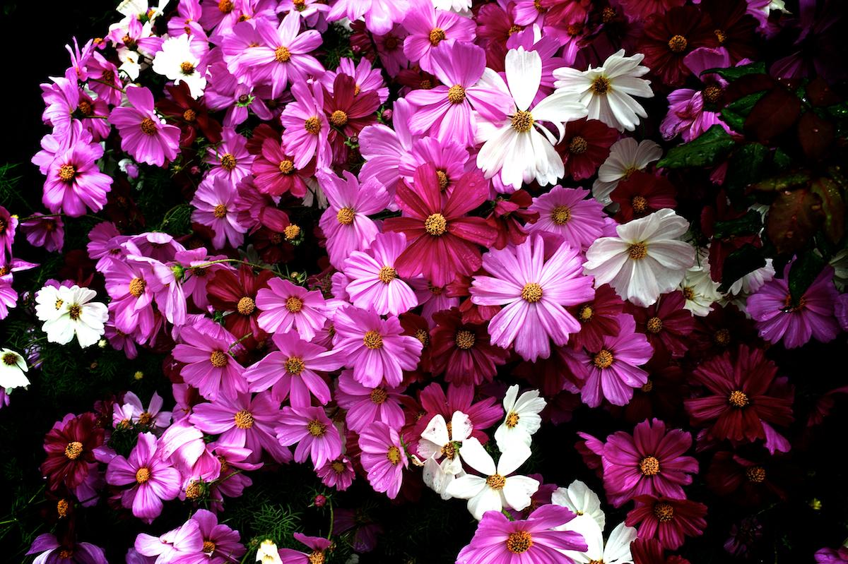 BIKERS LOVES FLOWERS…:BLF 1