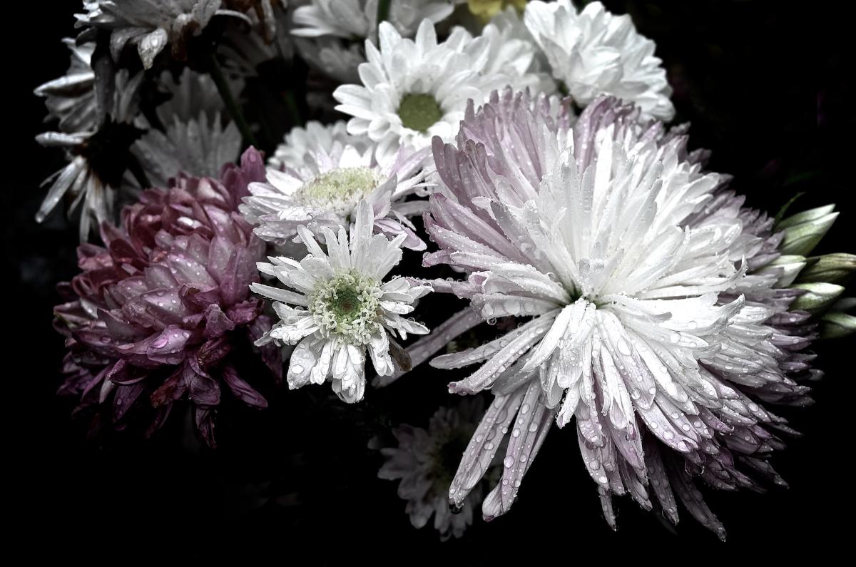 BIKERS LOVES FLOWERS…:BLF 5